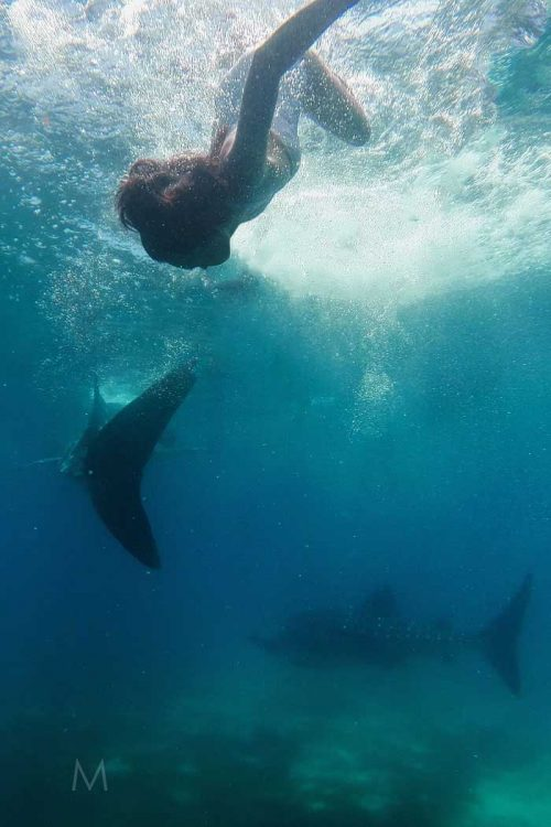 Oslob Whale Shark Pre-Wedding | Chex and Ed